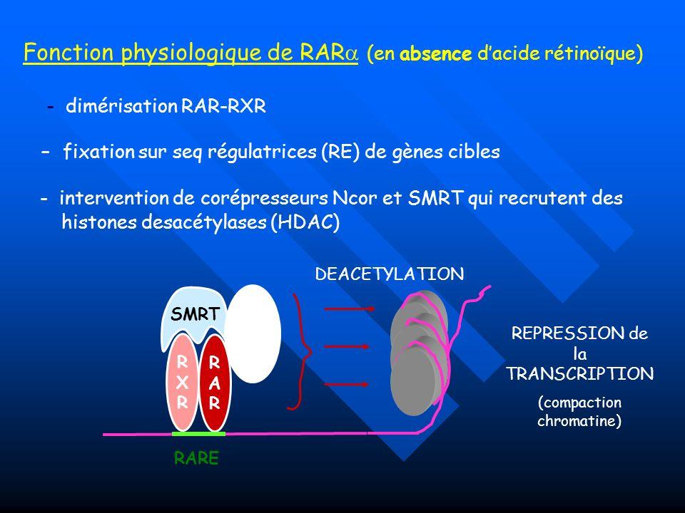 Fonction physiologique de RAR (en absence dacide rétinoïque) DEACETYLATION REPRESSION de la TRANSCRIPTION (compaction chromatine) RXRRXR RARRAR - dimé
