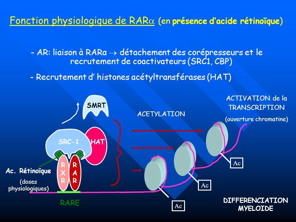 HAT - Recrutement d histones acétyltransférases (HAT) Fonction physiologique de RAR (en présence dacide rétinoïque) SRC-1 Ac ACETYLATION ACTIVATION de