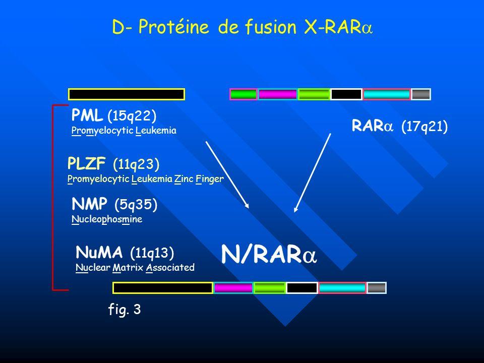 D- Protéine de fusion X-RAR N/RAR PML (15q22) Promyelocytic Leukemia PLZF (11q23) Promyelocytic Leukemia Zinc Finger NMP (5q35) Nucleophosmine NuMA (1