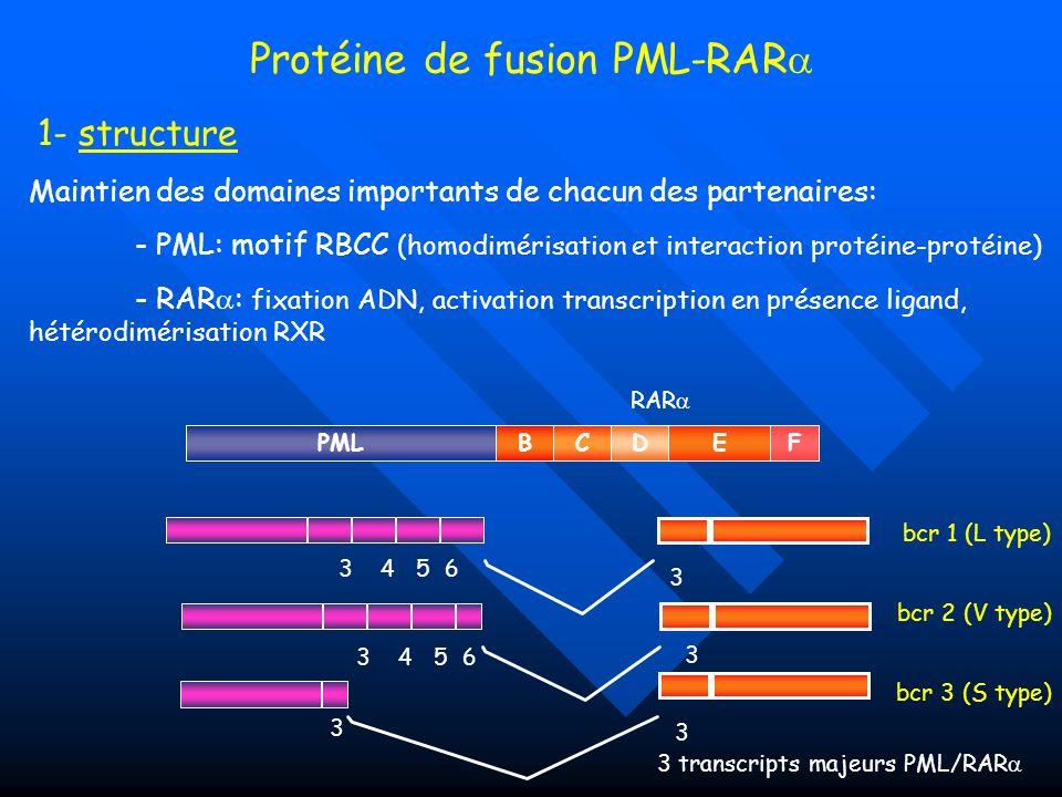 Maintien des domaines importants de chacun des partenaires: - PML: motif RBCC (homodimérisation et interaction protéine-protéine) - RAR : fixation ADN