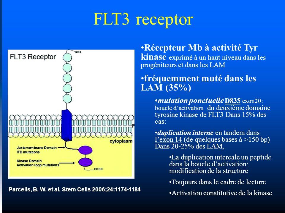 Parcells, B. W. et al. Stem Cells 2006;24:1174-1184 FLT3 receptor Récepteur Mb à activité Tyr kinase exprimé à un haut niveau dans les progéniteurs et