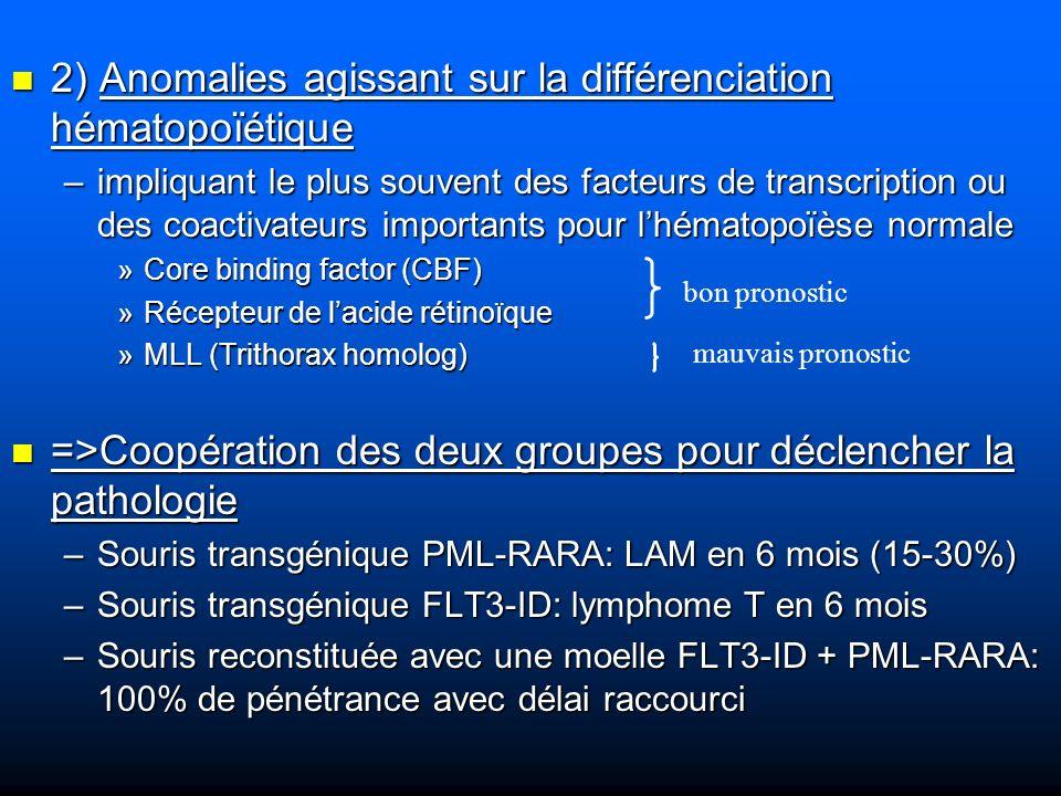 Gènes impliqués dans les translocations Ce sont très souvent des facteurs de transcription qui interviennent dans la « maintenance » des CSH et dans lhématopoïèse précoce (oncogènes) Ce sont très souvent des facteurs de transcription qui interviennent dans la « maintenance » des CSH et dans lhématopoïèse précoce (oncogènes) Cheminement de la découverte des fonctions de ces oncogènes: Cheminement de la découverte des fonctions de ces oncogènes: –1 - dabord par la compréhension de la pathologie maligne: les leucémies –2 - Certaines anomalies chromosomiques récurrentes de ces leucémies –3 – des modèles animaux modifiés (Tg; KO)