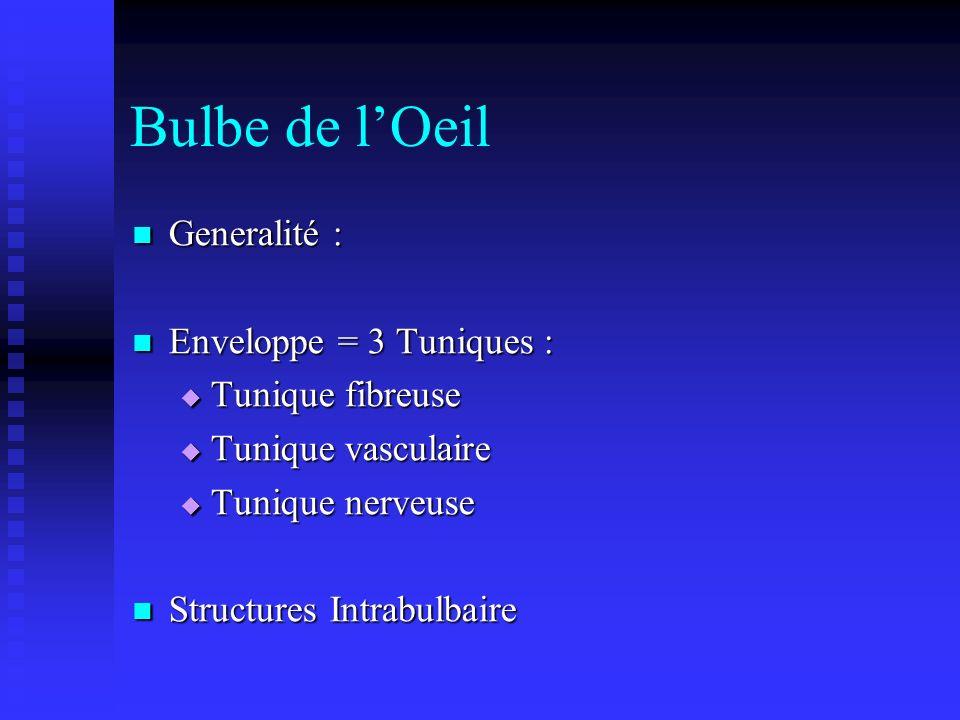 Bulbe de lOeil Generalité : Generalité : Enveloppe = 3 Tuniques : Enveloppe = 3 Tuniques : Tunique fibreuse Tunique fibreuse Tunique vasculaire Tuniqu