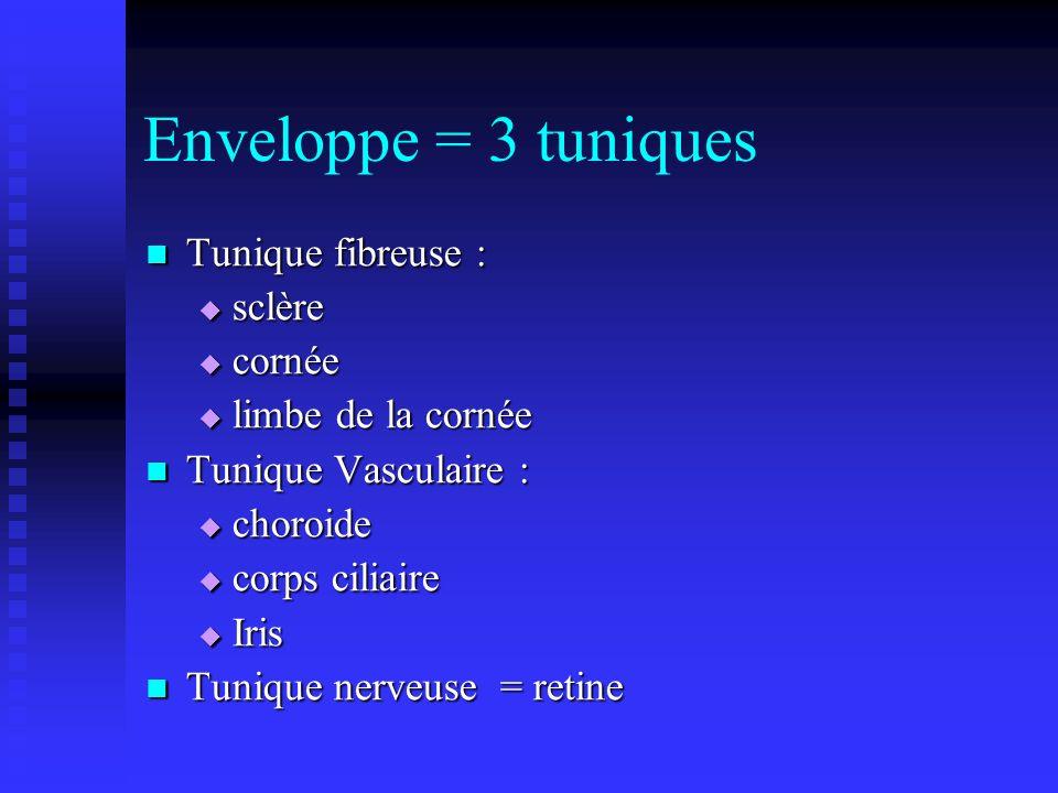 Enveloppe = 3 tuniques Tunique fibreuse : Tunique fibreuse : sclère sclère cornée cornée limbe de la cornée limbe de la cornée Tunique Vasculaire : Tu