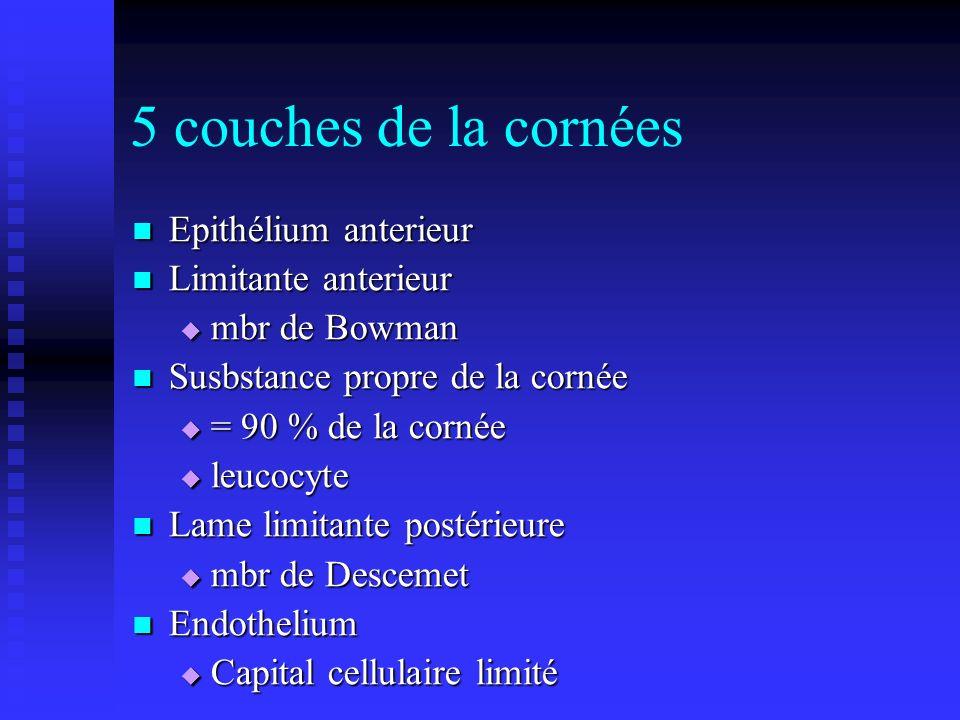 5 couches de la cornées Epithélium anterieur Epithélium anterieur Limitante anterieur Limitante anterieur mbr de Bowman mbr de Bowman Susbstance propr