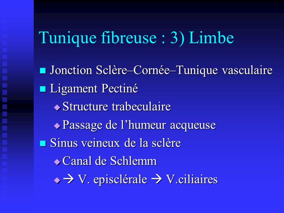 Tunique fibreuse : 3) Limbe Jonction Sclère–Cornée–Tunique vasculaire Jonction Sclère–Cornée–Tunique vasculaire Ligament Pectiné Ligament Pectiné Stru
