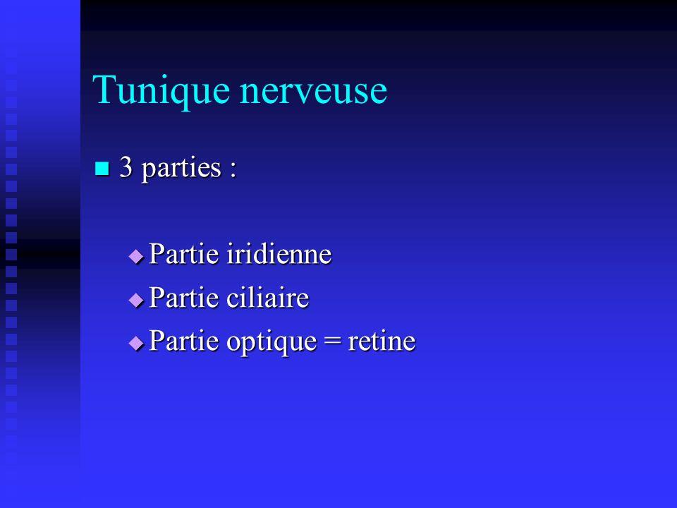 Tunique nerveuse 3 parties : 3 parties : Partie iridienne Partie iridienne Partie ciliaire Partie ciliaire Partie optique = retine Partie optique = re