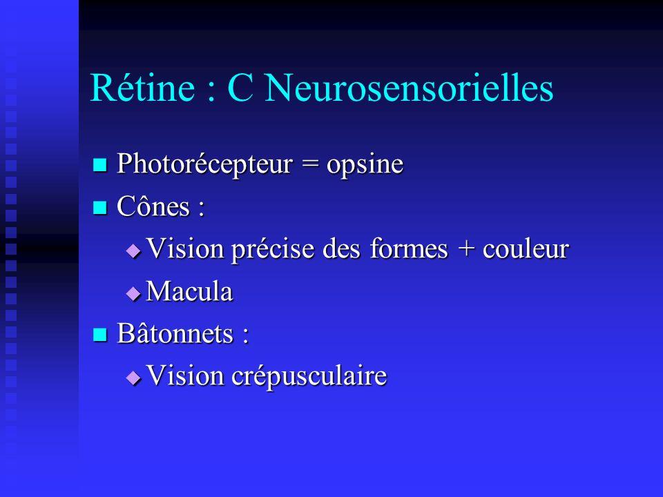 Rétine : C Neurosensorielles Photorécepteur = opsine Photorécepteur = opsine Cônes : Cônes : Vision précise des formes + couleur Vision précise des fo
