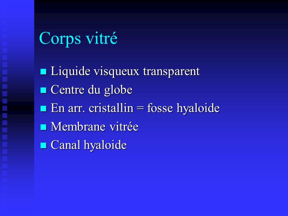 Corps vitré Liquide visqueux transparent Liquide visqueux transparent Centre du globe Centre du globe En arr. cristallin = fosse hyaloide En arr. cris