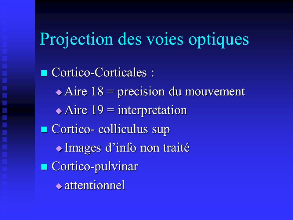 Projection des voies optiques Cortico-Corticales : Cortico-Corticales : Aire 18 = precision du mouvement Aire 18 = precision du mouvement Aire 19 = in