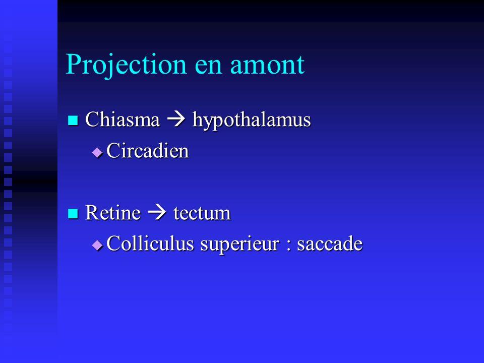 Projection en amont Chiasma hypothalamus Chiasma hypothalamus Circadien Circadien Retine tectum Retine tectum Colliculus superieur : saccade Colliculu