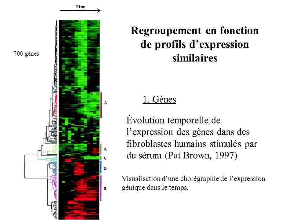 Regroupement en fonction de profils dexpression similaires 1. Gènes Évolution temporelle de lexpression des gènes dans des fibroblastes humains stimul