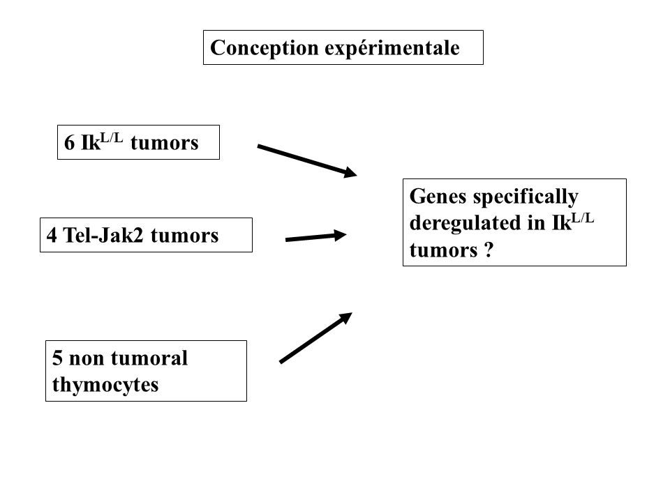 6 Ik L/L tumors 4 Tel-Jak2 tumors 5 non tumoral thymocytes Genes specifically deregulated in Ik L/L tumors ? Conception expérimentale