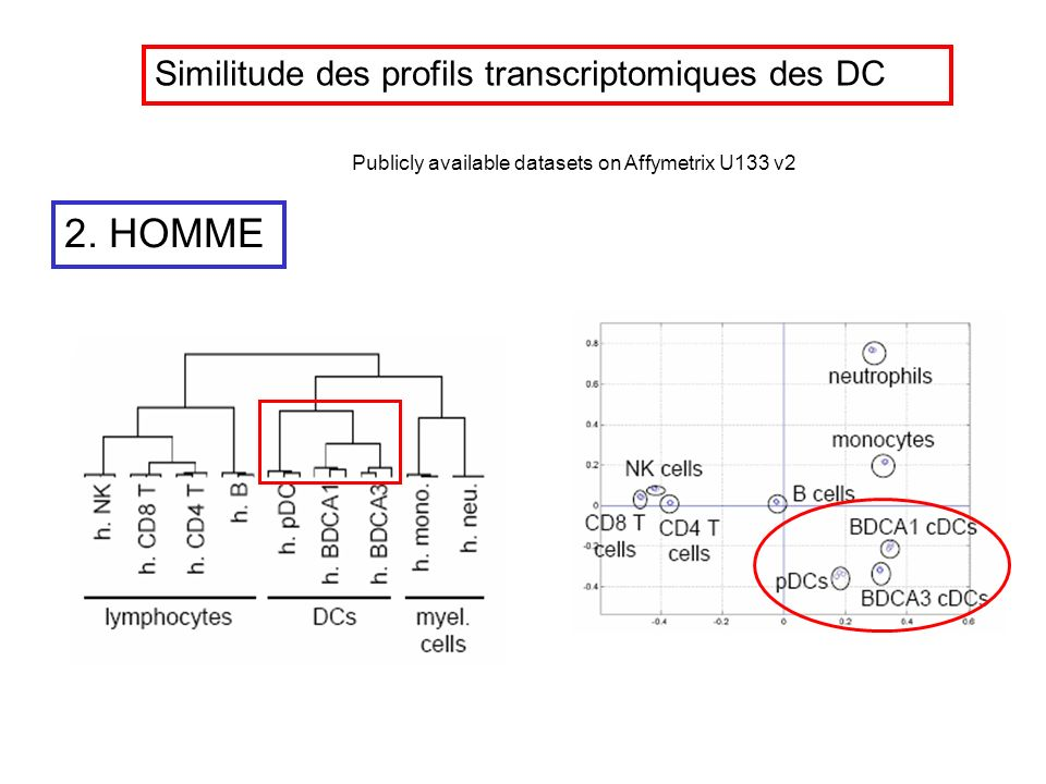 2. HOMME Publicly available datasets on Affymetrix U133 v2 Similitude des profils transcriptomiques des DC