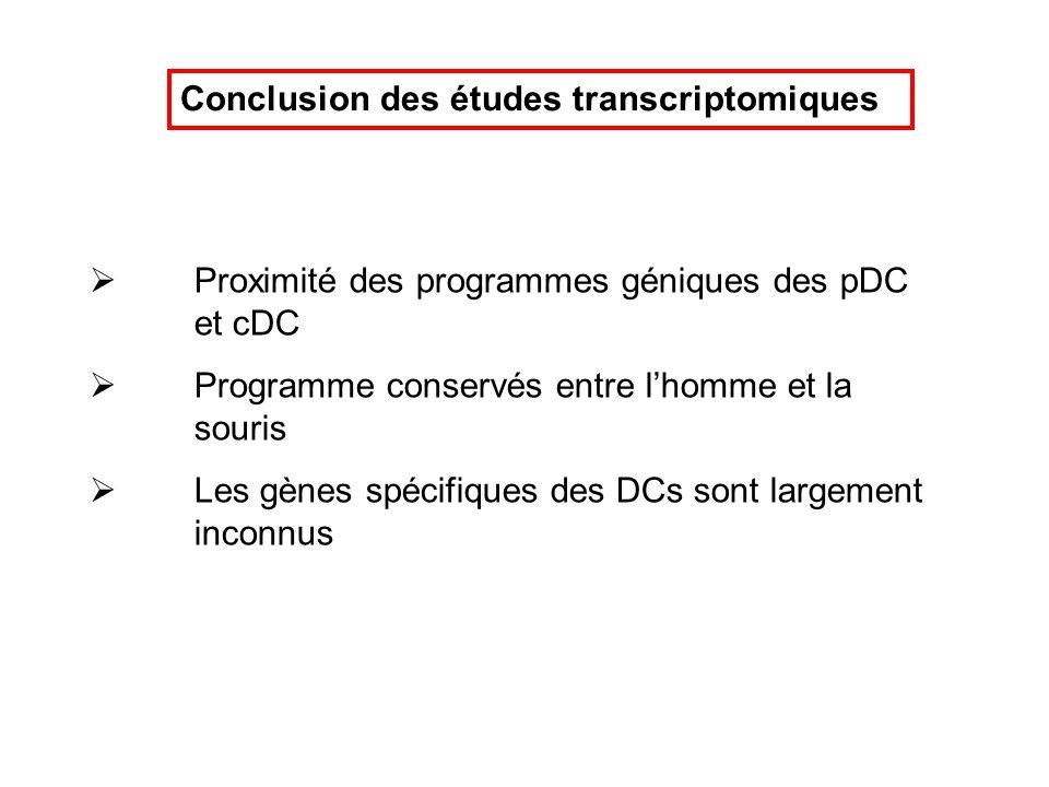 Conclusion des études transcriptomiques Proximité des programmes géniques des pDC et cDC Programme conservés entre lhomme et la souris Les gènes spéci