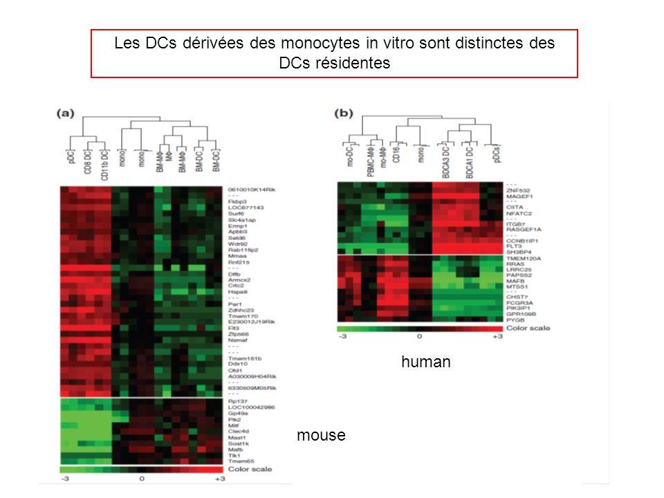 human mouse Les DCs dérivées des monocytes in vitro sont distinctes des DCs résidentes