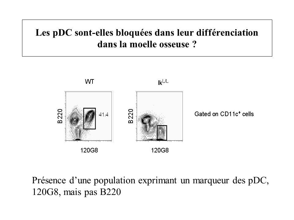 Les pDC sont-elles bloquées dans leur différenciation dans la moelle osseuse ? Présence dune population exprimant un marqueur des pDC, 120G8, mais pas