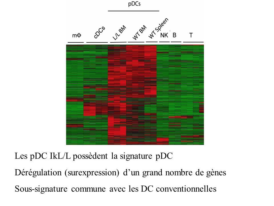 Les pDC IkL/L possèdent la signature pDC Dérégulation (surexpression) dun grand nombre de gènes Sous-signature commune avec les DC conventionnelles