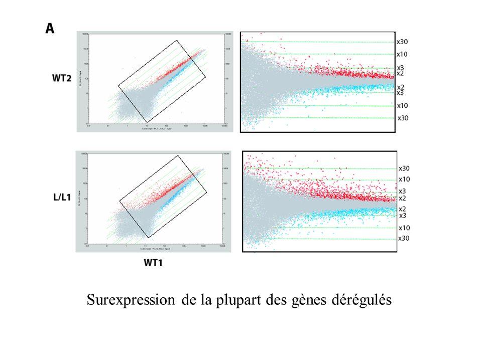 Surexpression de la plupart des gènes dérégulés