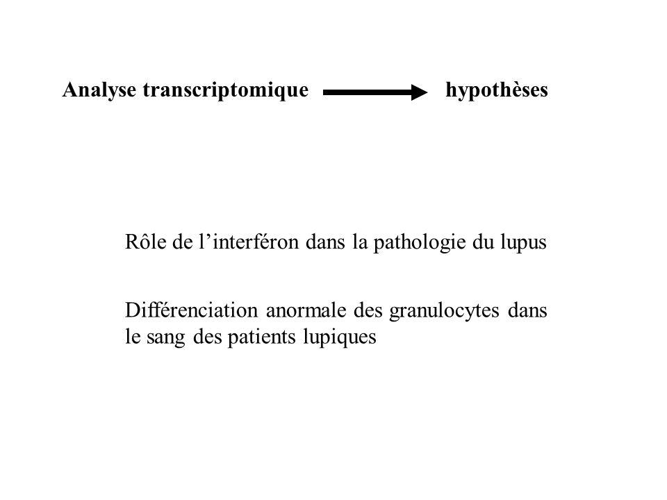 Rôle de linterféron dans la pathologie du lupus Différenciation anormale des granulocytes dans le sang des patients lupiques Analyse transcriptomiqueh