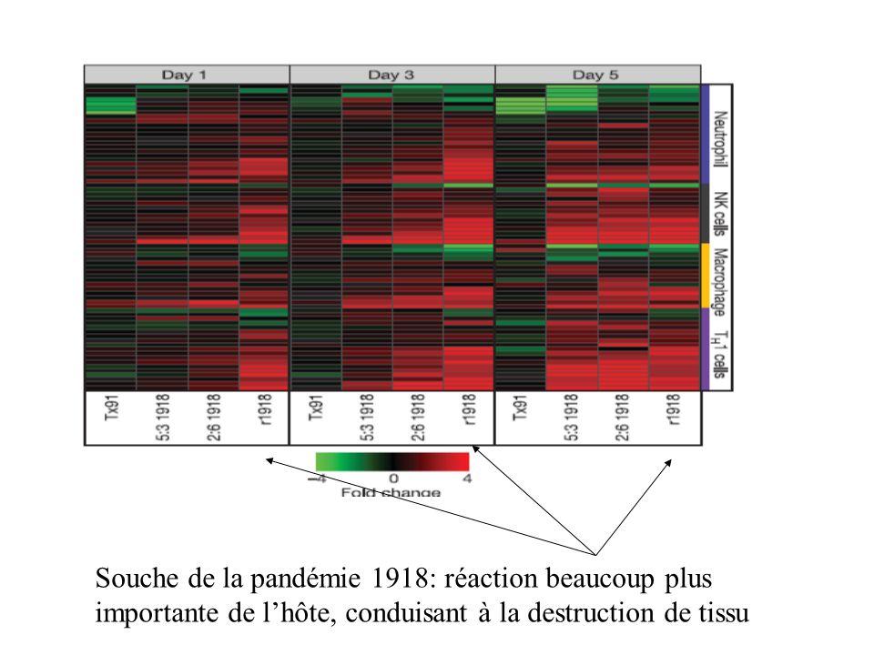 Souche de la pandémie 1918: réaction beaucoup plus importante de lhôte, conduisant à la destruction de tissu