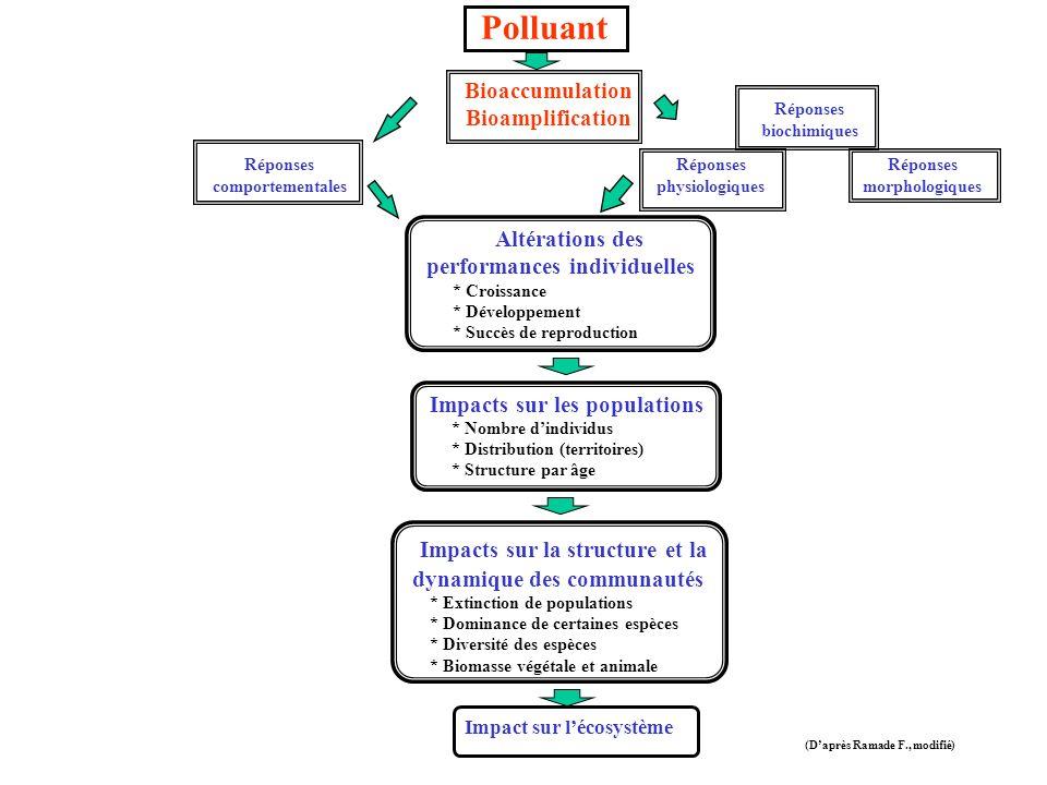 Polluant Bioaccumulation Bioamplification Réponses comportementales Altérations des performances individuelles * Croissance * Développement * Succès de reproduction Impacts sur les populations * Nombre dindividus * Distribution (territoires) * Structure par âge Impacts sur la structure et la dynamique des communautés * Extinction de populations * Dominance de certaines espèces * Diversité des espèces * Biomasse végétale et animale Impact sur lécosystème (Daprès Ramade F., modifié) Réponses biochimiques Réponses physiologiques Réponses morphologiques