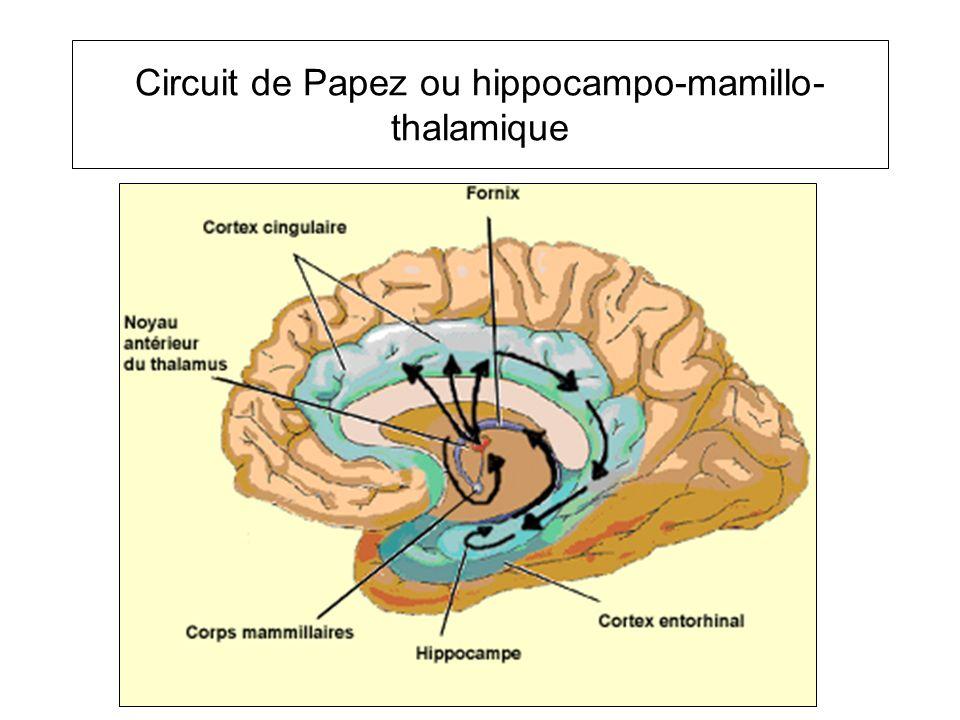 Circuit de Papez ou hippocampo-mamillo- thalamique