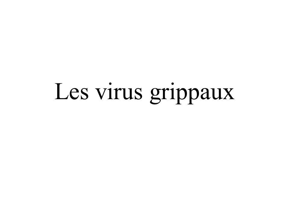 Neuraminidase (N1-9) Hémagglutinine (H1-16) Virus A rencontrés chez lHomme actuellement: H1N1, H3N2 Virus A rencontrés chez les oiseaux actuellement: H5N1, H7N7… Les virus grippaux