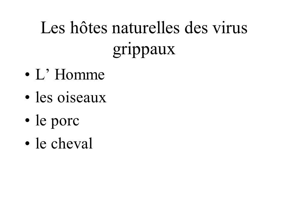 Les hôtes naturelles des virus grippaux L Homme les oiseaux le porc le cheval