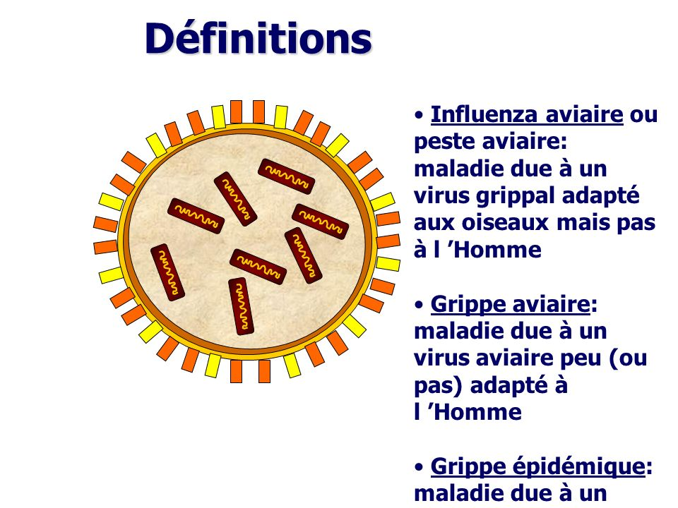 Définitions Influenza aviaire ou peste aviaire: maladie due à un virus grippal adapté aux oiseaux mais pas à l Homme Grippe aviaire: maladie due à un
