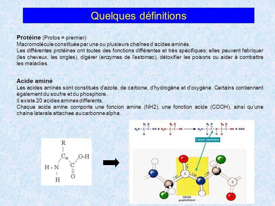 Quelques définitions Protéine (Protos = premier) Macromolécule constituée par une ou plusieurs chaînes dacides aminés. Les différentes protéines ont t