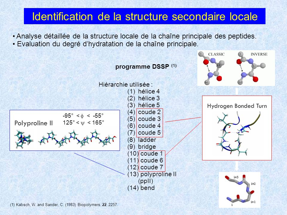 Identification de la structure secondaire locale Analyse détaillée de la structure locale de la chaîne principale des peptides. Evaluation du degré dh