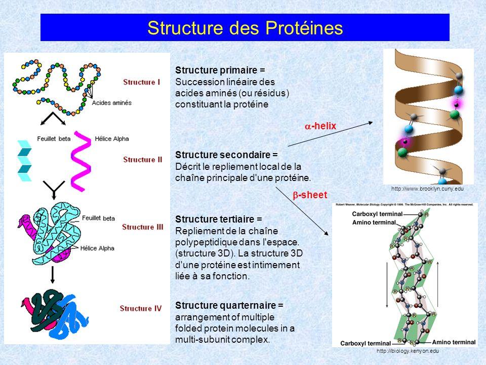 Identification de la structure secondaire locale Analyse détaillée de la structure locale de la chaîne principale des peptides.
