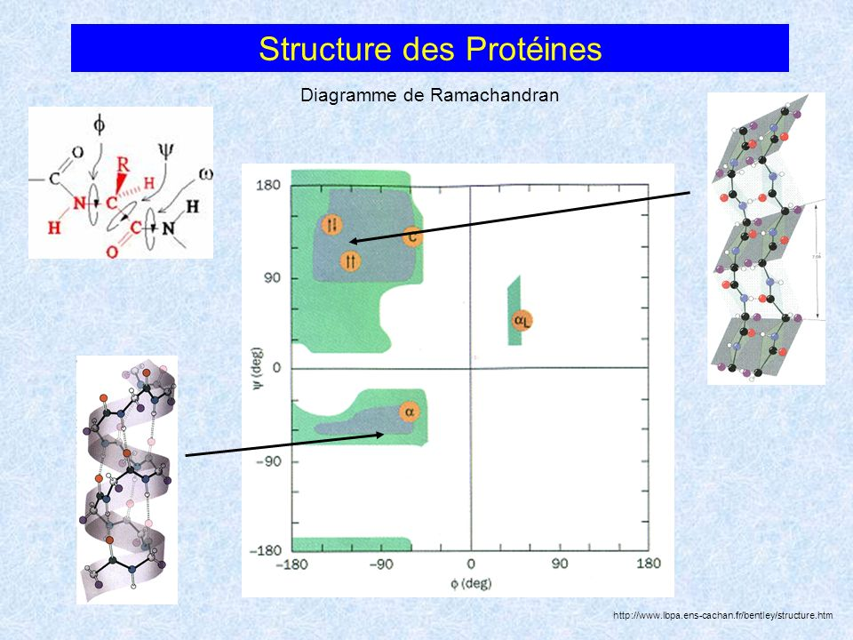 Structure des Protéines Diagramme de Ramachandran http://www.lbpa.ens-cachan.fr/bentley/structure.htm
