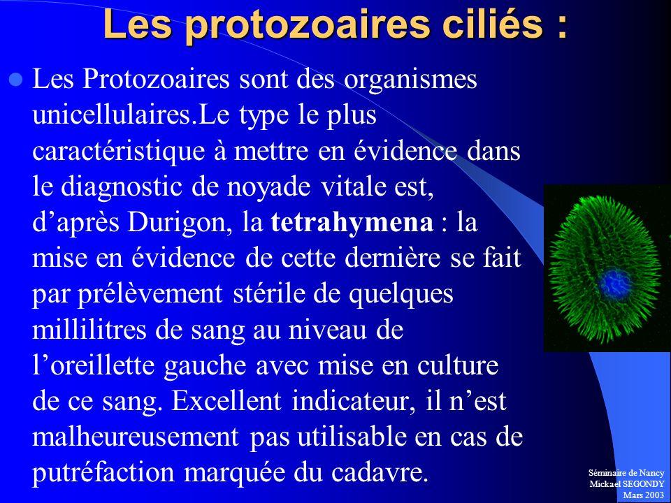 Séminaire de Nancy Mickael SEGONDY Mars 2003 Les Protozoaires sont des organismes unicellulaires.Le type le plus caractéristique à mettre en évidence