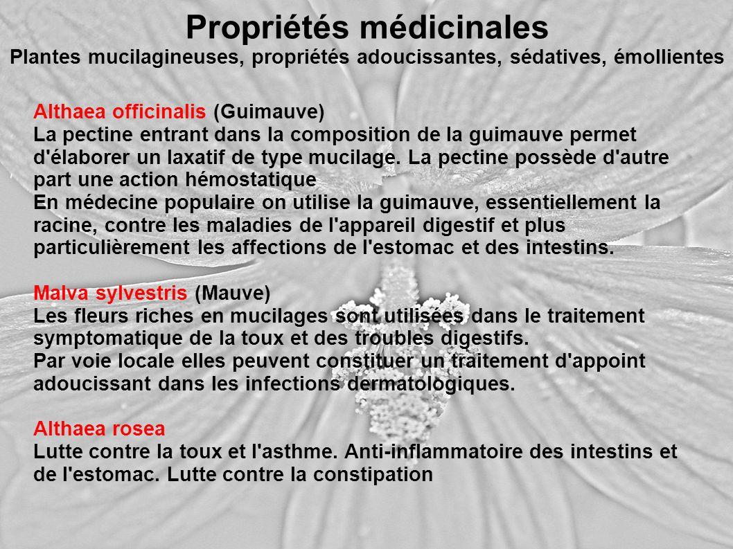 Propriétés médicinales Plantes mucilagineuses, propriétés adoucissantes, sédatives, émollientes Althaea officinalis (Guimauve) La pectine entrant dans