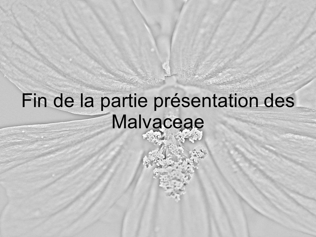 Fin de la partie présentation des Malvaceae