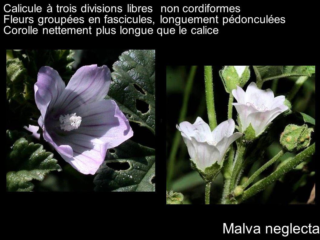 Malva neglecta Calicule à trois divisions libres non cordiformes Fleurs groupées en fascicules, longuement pédonculées Corolle nettement plus longue q