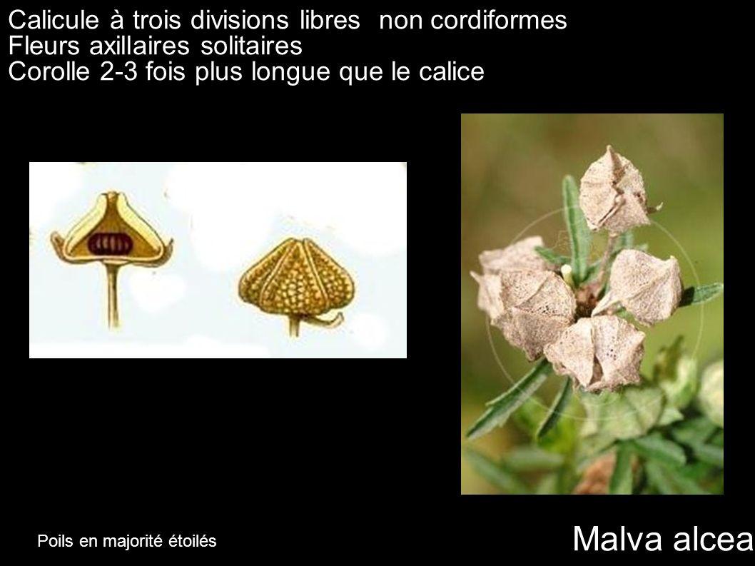 Calicule à trois divisions libres non cordiformes Fleurs axillaires solitaires Corolle 2-3 fois plus longue que le calice Malva alcea Poils en majorit