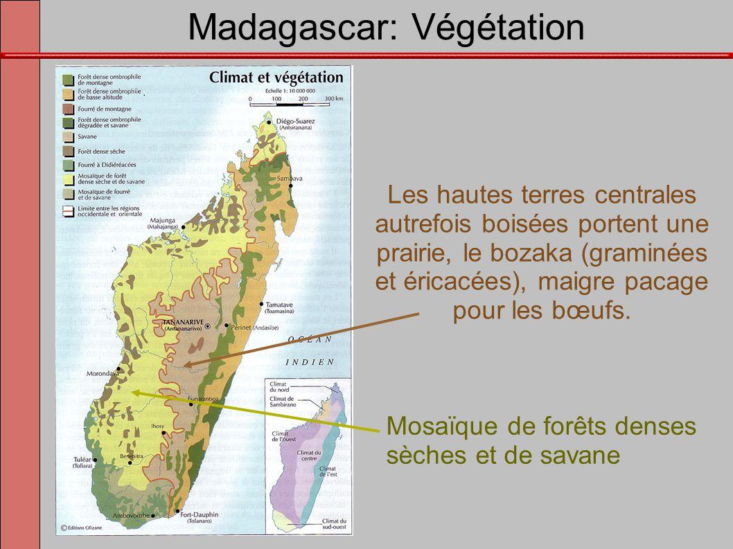 Madagascar: Végétation Les hautes terres centrales autrefois boisées portent une prairie, le bozaka (graminées et éricacées), maigre pacage pour les b