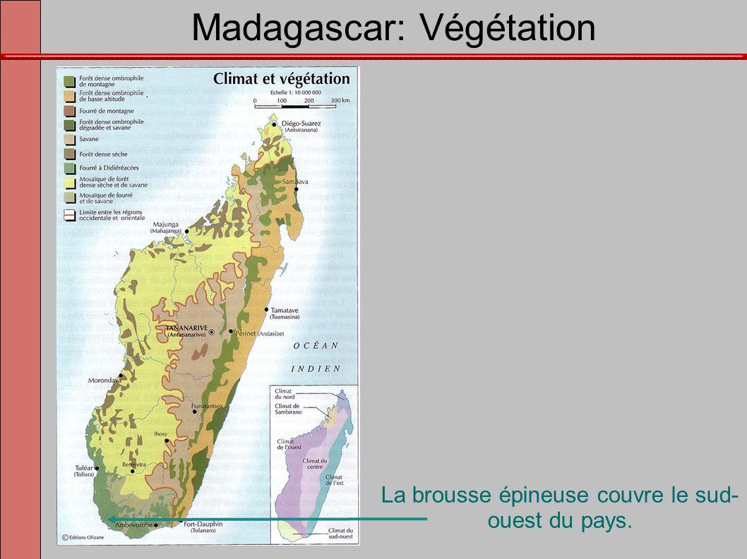 Madagascar: Végétation La brousse épineuse couvre le sud- ouest du pays.
