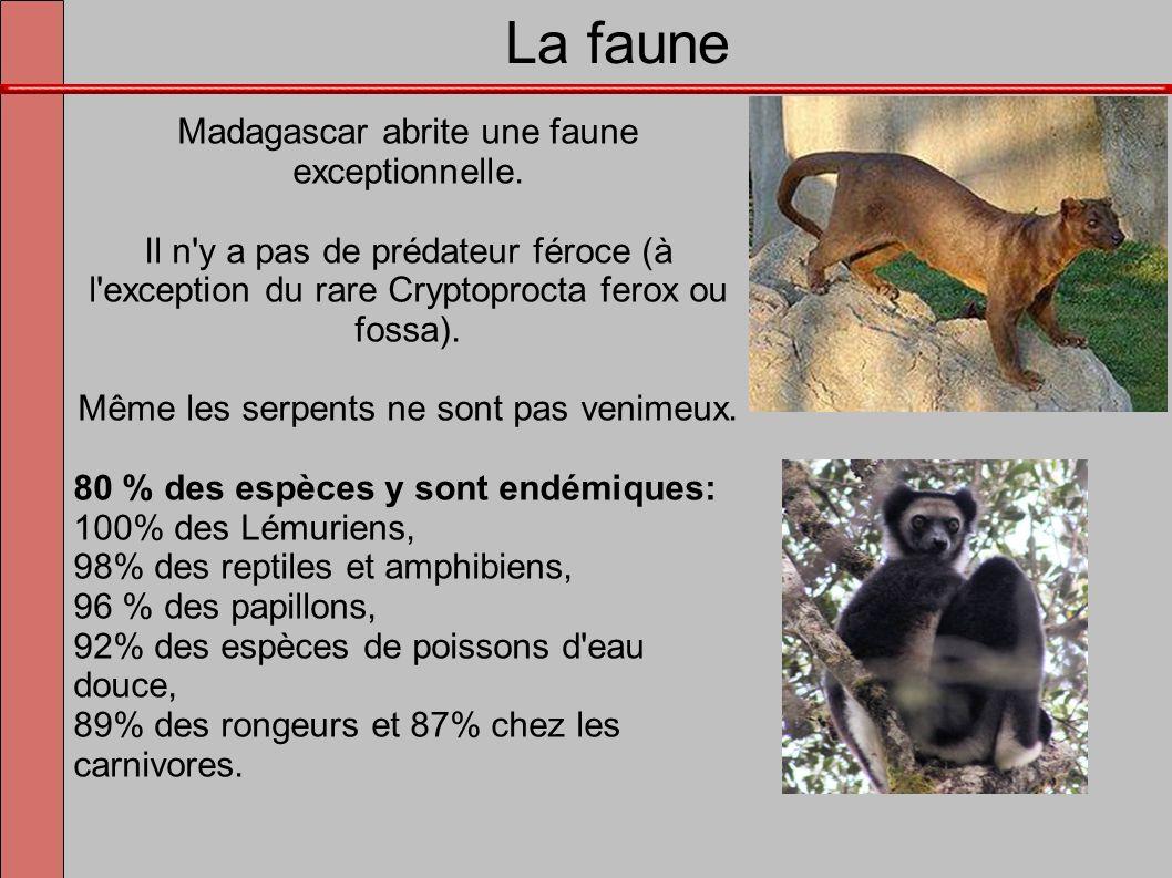 La faune Madagascar abrite une faune exceptionnelle. Il n'y a pas de prédateur féroce (à l'exception du rare Cryptoprocta ferox ou fossa). Même les se