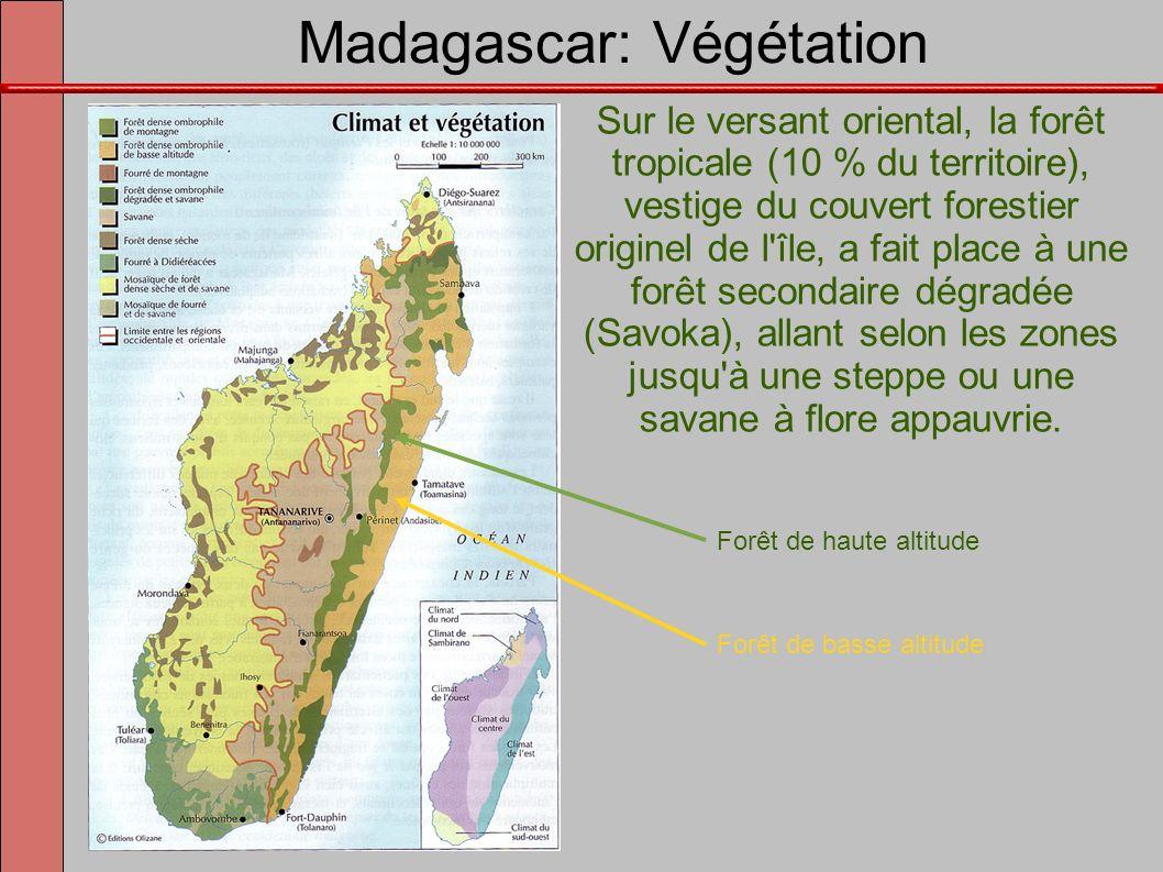 Madagascar: Végétation Les hautes terres centrales autrefois boisées portent une prairie, le bozaka (graminées et éricacées), maigre pacage pour les bœufs.