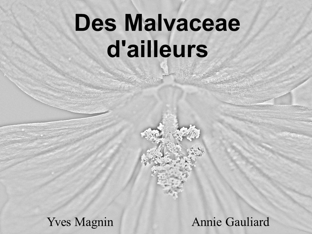 Des Malvaceae d'ailleurs Yves Magnin Annie Gauliard