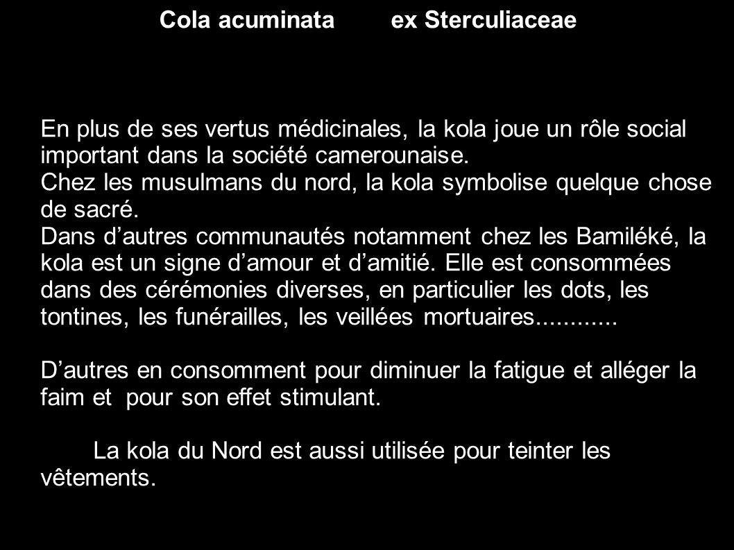 Cola acuminata ex Sterculiaceae En plus de ses vertus médicinales, la kola joue un rôle social important dans la société camerounaise. Chez les musulm