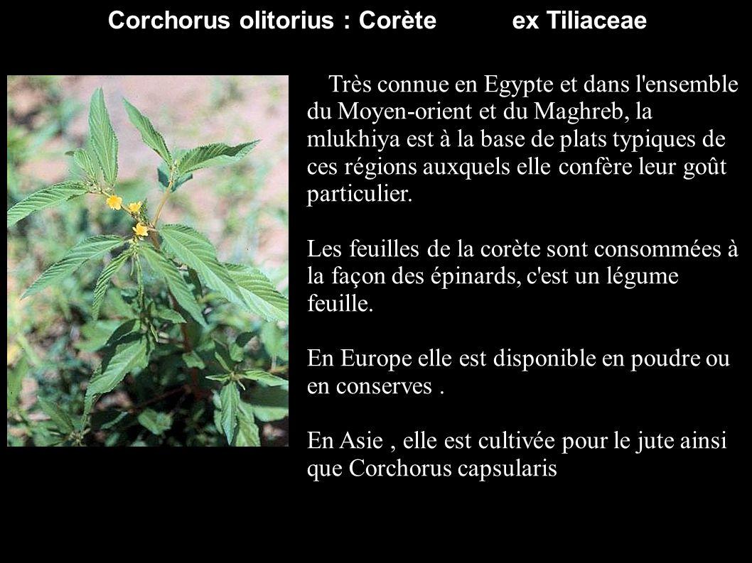 Corchorus olitorius : Corète ex Tiliaceae Très connue en Egypte et dans l'ensemble du Moyen-orient et du Maghreb, la mlukhiya est à la base de plats t