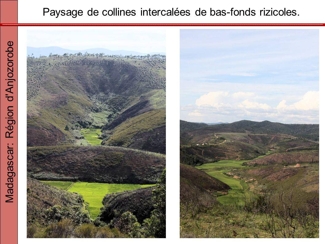 Paysage de collines intercalées de bas-fonds rizicoles. Madagascar: Région d'Anjozorobe