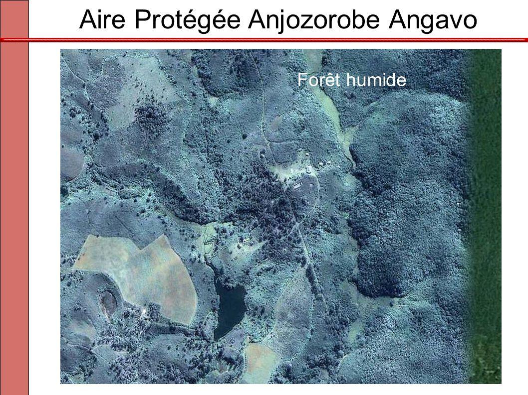 Aire Protégée Anjozorobe Angavo À 90km au nord d'Antananarivo Forêt humide