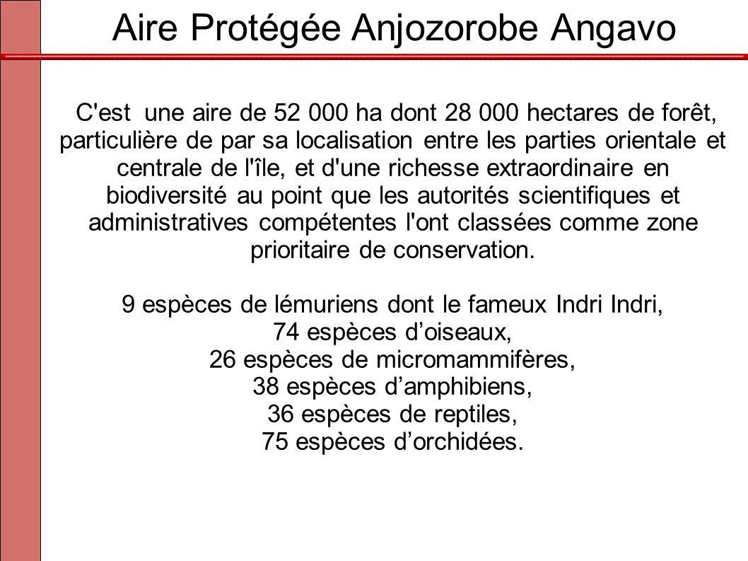 Aire Protégée Anjozorobe Angavo C'est une aire de 52 000 ha dont 28 000 hectares de forêt, particulière de par sa localisation entre les parties orien