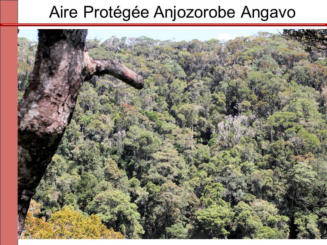 Aire Protégée Anjozorobe Angavo Forêt humide